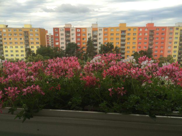 Přivítejte jaro i na balkónech, terasách a parapetech