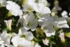 Užijte si radost z letní zahradní pohody